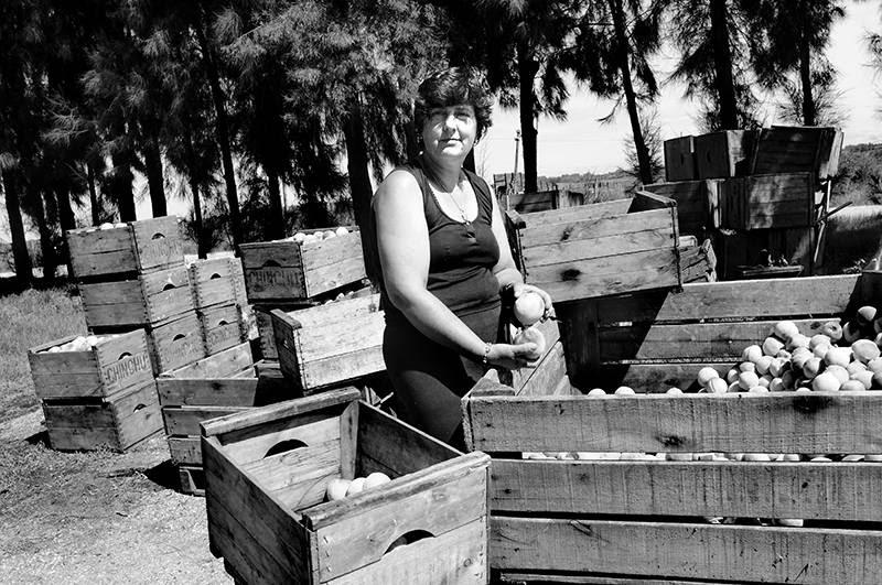 Lilián Arbelo, productora de duraznos, en su chacra de Rincón del Colorado, Canelones. / Foto: Pablo Nogueira (archivo, febrero de 2014)
