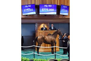 The Malibu Moon filly consigned as Hip 592 was purchased by OXO Equine at the New York-Bred Sale