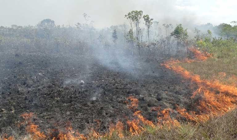 Resultado de imagen para incendio en el amazonia