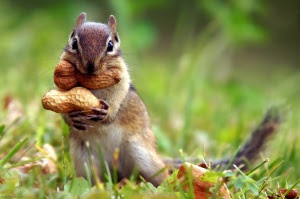greedy-squirrel