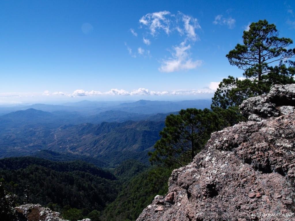 Deforestación, minería y narcotráfico afectan a la Reserva de Manantlán