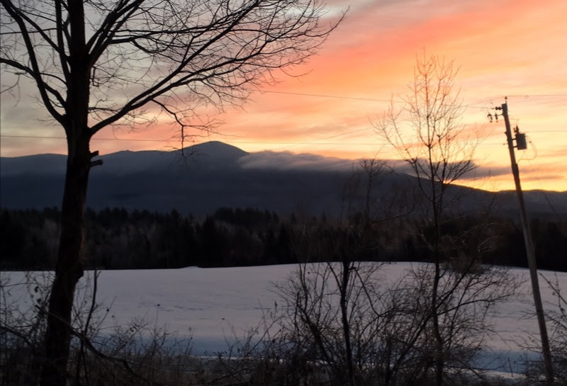 Alive in the Forest: Vermont Family Forests Winter 2019 Newsletterorest: Vermont Family Forests Wint…