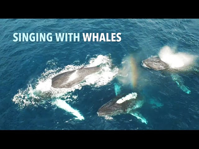 Chip Richards: Singing with the Whales  Sddefault