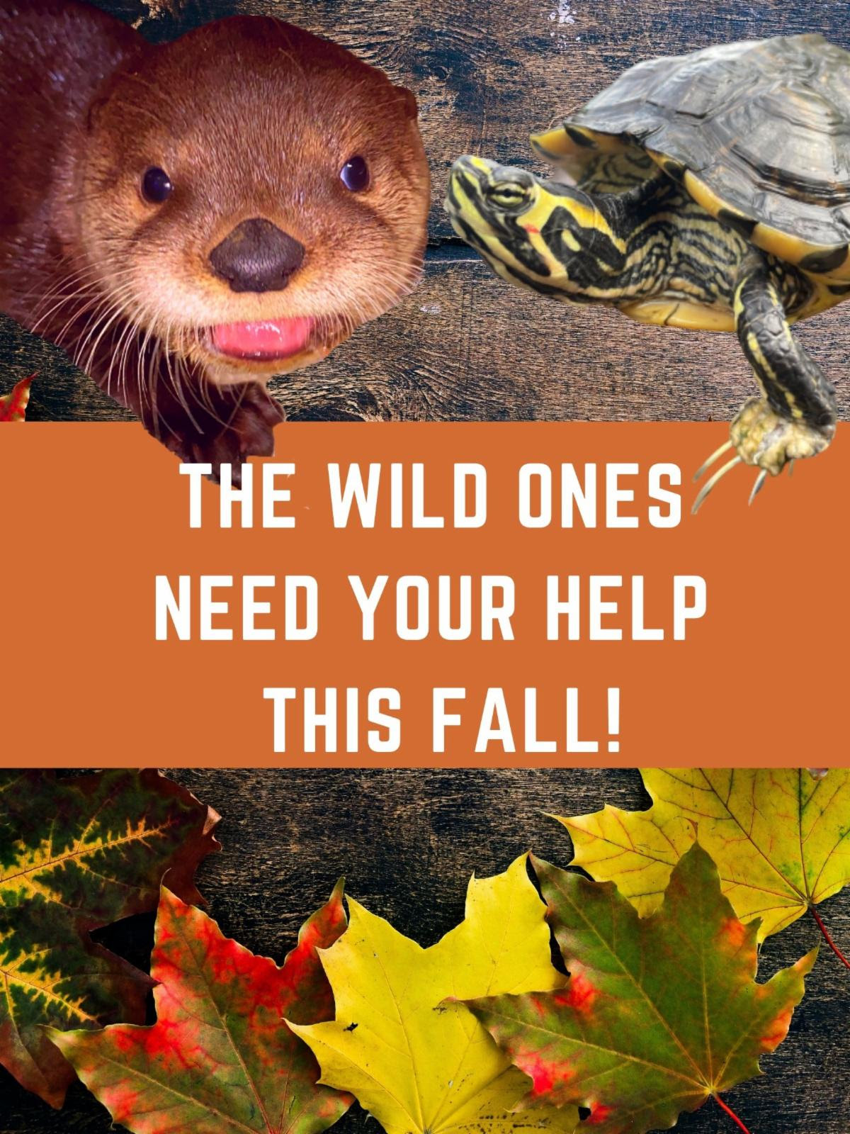 Help save the wild ones this fall