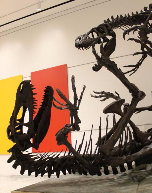 Dryptosaurs