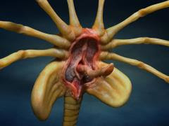 ALIENS FACEHUGGER LIFE-SIZE REPLICA