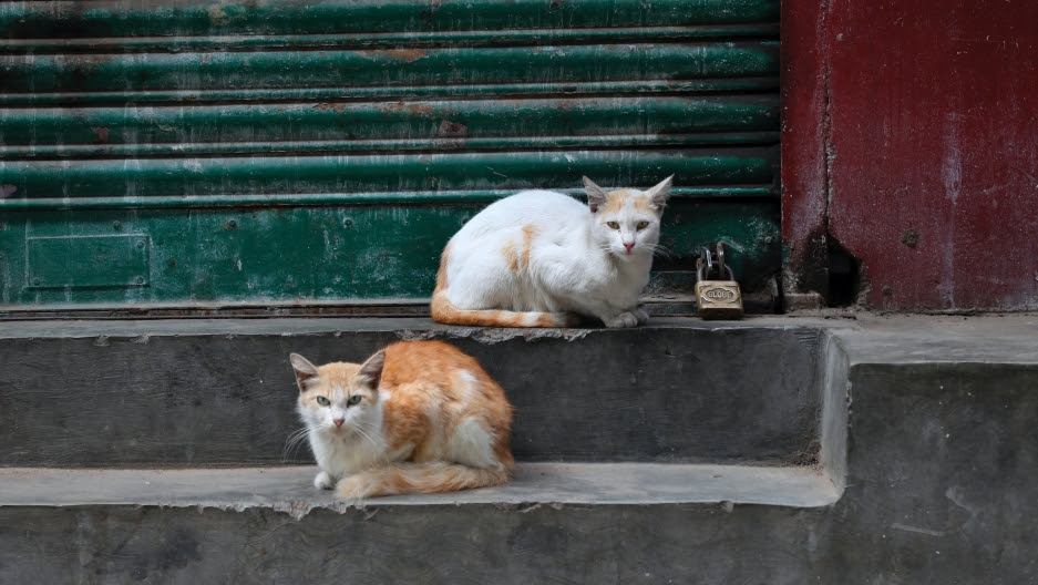 Cats rest outside a closed shop in a containment zone during a coronavirus lockdown in Bengaluru, India, July 5, 2020.