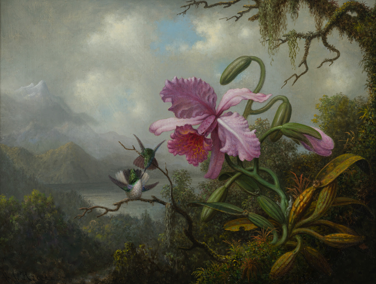 Martin Johnson Heade. Orchid and Hummingbirds near a Mountain Lake, about 1875 – 90. Oil on canvas. Collection of Carolyn A. and Peter S. Lynch.