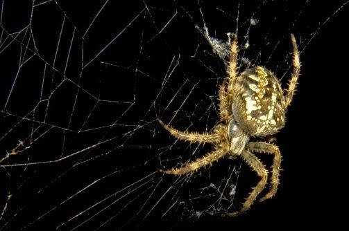 spiders_closeup_spider_478391
