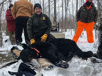 Michigan Conservation Officer Jessica Curtis is shown during a winter a bear den check.