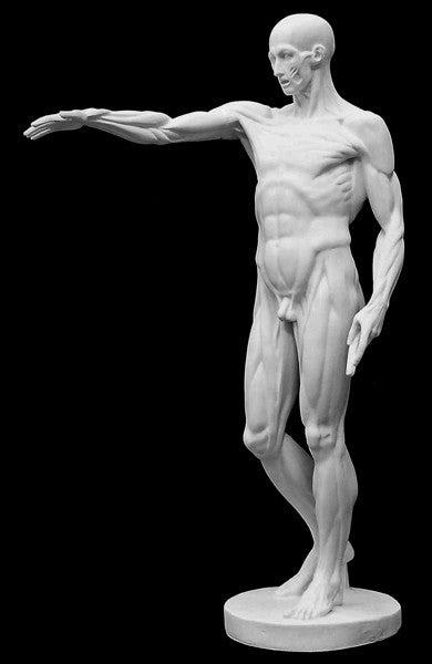 Anatomical Man No 3 - Item #625