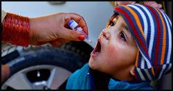 The figure above is a photograph showing a child in Pakistan receiving oral poliovirus vaccine.
