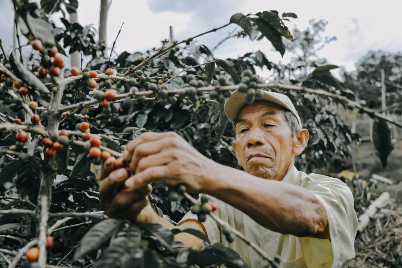 agricultor-hombre-cafe-microfinanzas-agricultura-Sergio-Monroy-1170x780