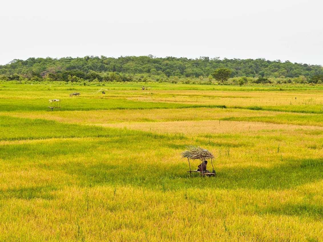 9. Guinea-Bissau: 7,500