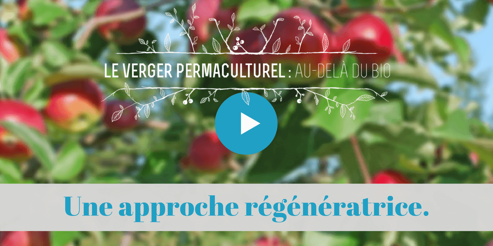 verger, pommiers, permaculture