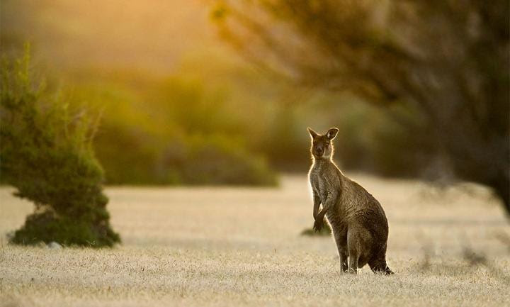 Meet the locals on Kangaroo Island