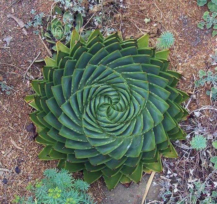 hình học thực vật