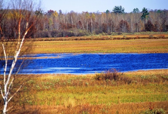 Sandhill Wildlife Area's marsh and grasses on a sunny day.