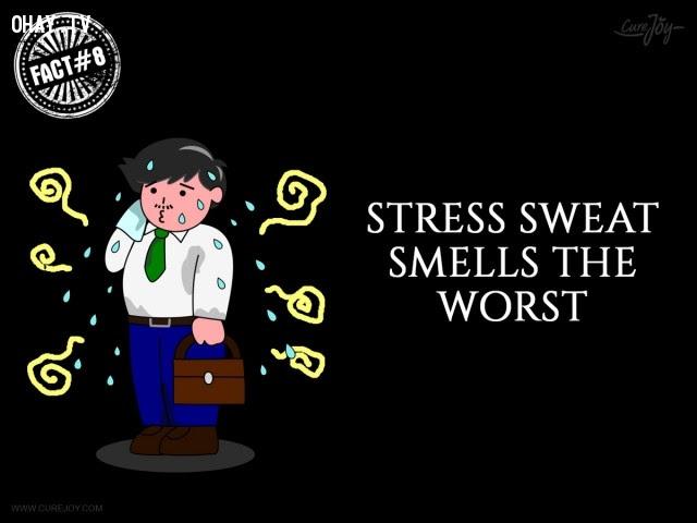 8. Mồ hôi do căng thẳng có mùi tệ nhất.,mồ hôi,đổ mồ hôi,sự thật thú vị,sự thật kỳ lạ,những điều thú vị trong cuộc sống,có thể bạn chưa biết
