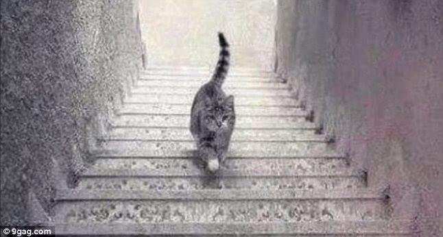 Va intereseaza? Pisica-urc%C4%83-sau-coboar%C4%83
