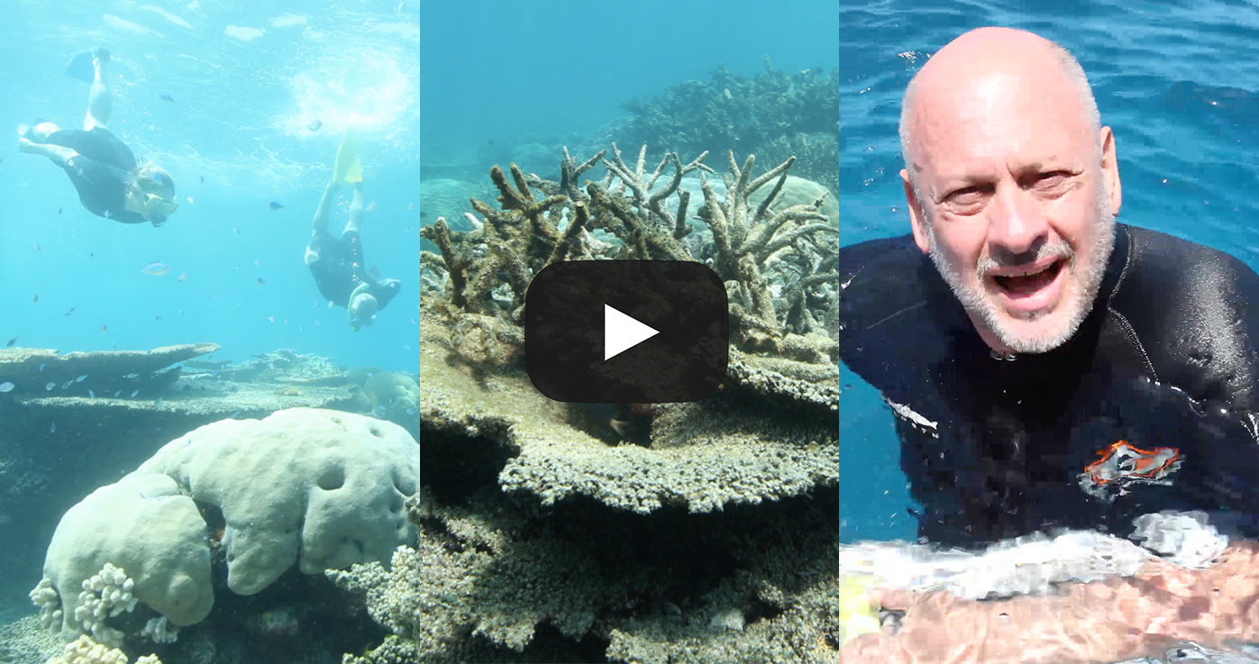 CC_Reef2_Video_Still_Comp2.jpg