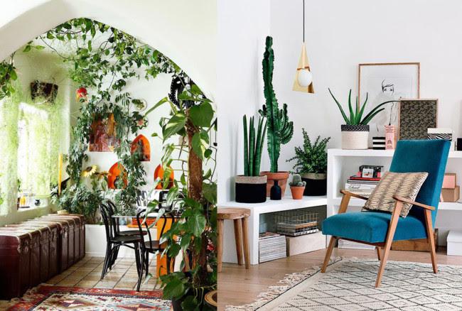 Plantas Estancia