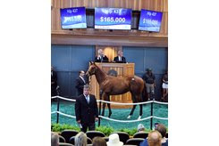 The colt by Outwork consigned as Hip 437 in the ring at the New York-Bred Sale
