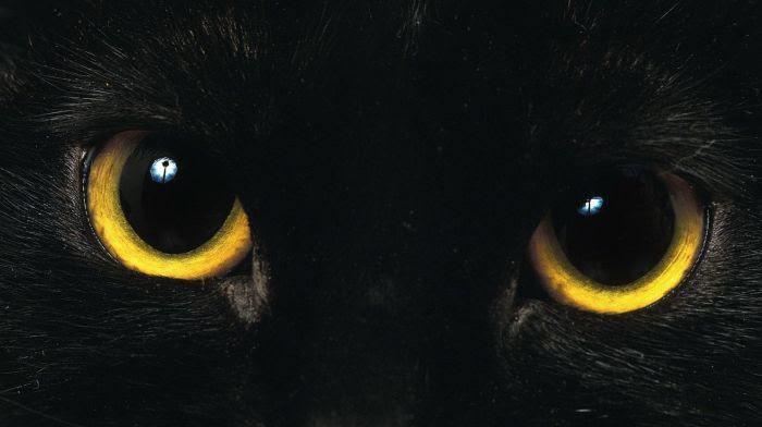 Le 17 août, c'est la Journée internationale des chats noirs.