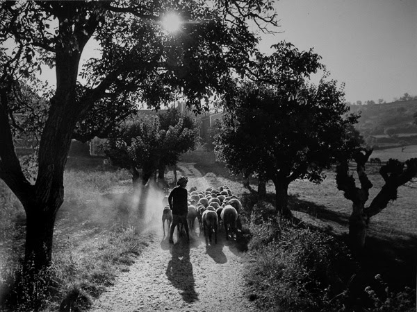 Denis Brihat,Le petit berger