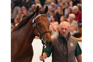 The Dubawi colt consigned as Lot 325 is led to the ring during the Tattersalls October Yearling Sale