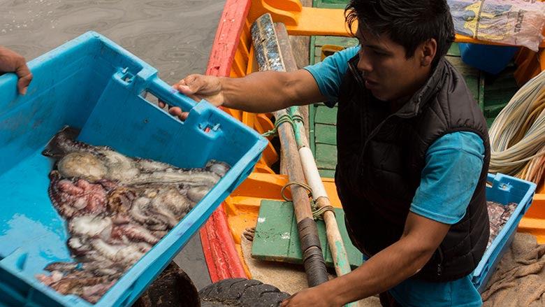 Pescador artesanal descargando calamares en Pucusana, Perú . © Flore de Preneuf/Banco Mundial