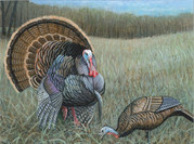 A painting of a male turkey.