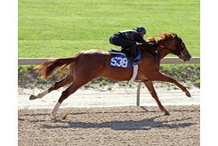 The Nyquist colt consigned as Hip 538 breezes during the under tack show ahead of the Midlantic Sale