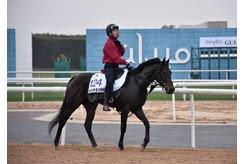 Serein at Meydan Racecourse