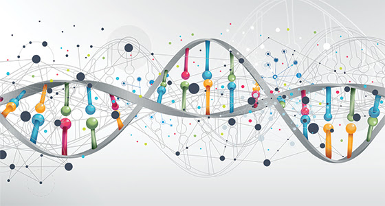 PAC1R mutation may be linked to severity of social deficits in autism