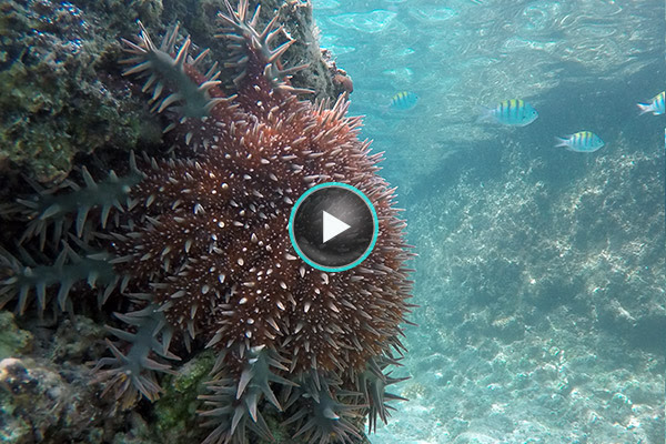Snorkeling with sea life on a Sea of Cortes cruise
