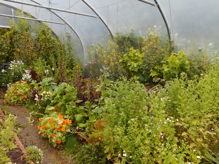 North-east polytunnel beds look like a herbaceous border
