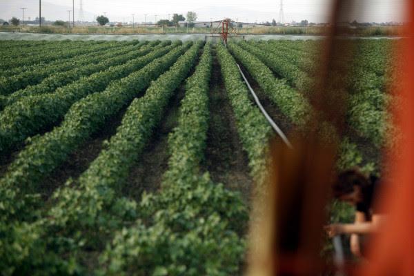 Ποιοι αγρότες δικαιούνται έκπτωση φόρου έως 2.100 ευρώ - Οι προϋποθέσεις