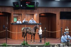 The Mosler filly consigned as Hip 401 in the ring at the OBS October Yearling Sale