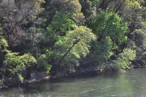 Photo of river in spring