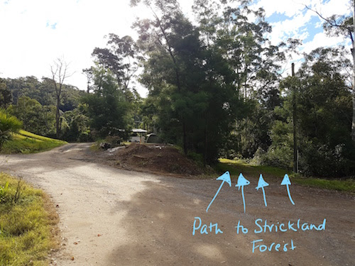 PIC1 Narara Path to Strickland Forest.jpg