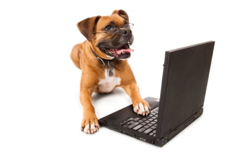 Size matters in canine smarts - Technology & science - Science ...