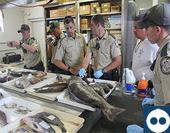 Fish ID Workshop