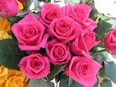 Imágenes de flores y plantas: Rosas