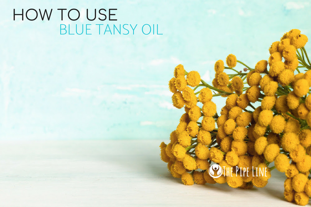 HERE'S HOW TO USE BLUE TANSY E...