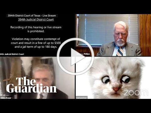 'I'm not a cat': lawyer gets stuck on Zoom kitten filter during court case