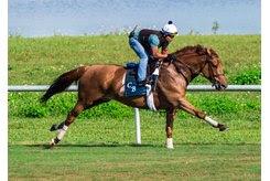 Almanaar stretches his legs at Palm Meadows