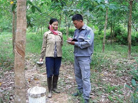 Khuong Ho Sy, Project RENEW/NPA