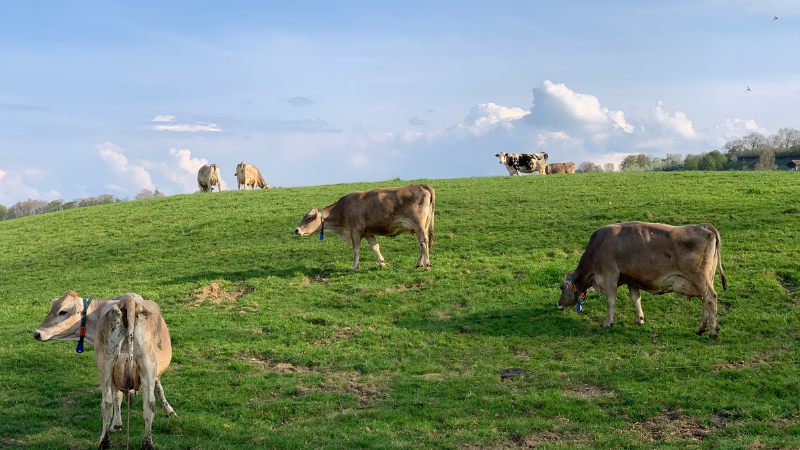 Learn About Multi-Species Grazing
