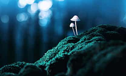 Psychedelics are transforming the way we understand depression and its treatment